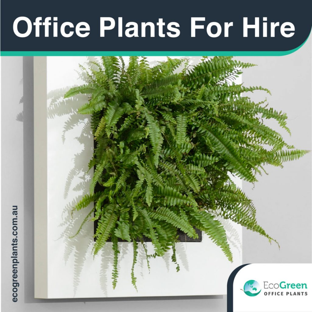 Green Plants for the Benefit of Office Environments